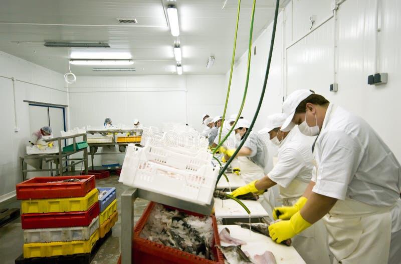 Fábrica del alimento de pescados imágenes de archivo libres de regalías
