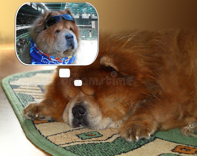 Fã de hóquei notável em uma imagem de um cão fotografia de stock royalty free