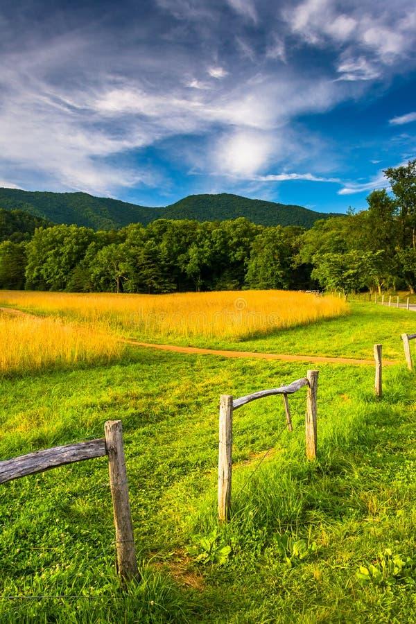 Fäkta och fältet på den cades lilla viken, den Great Smoky Mountains medborgaren arkivfoto