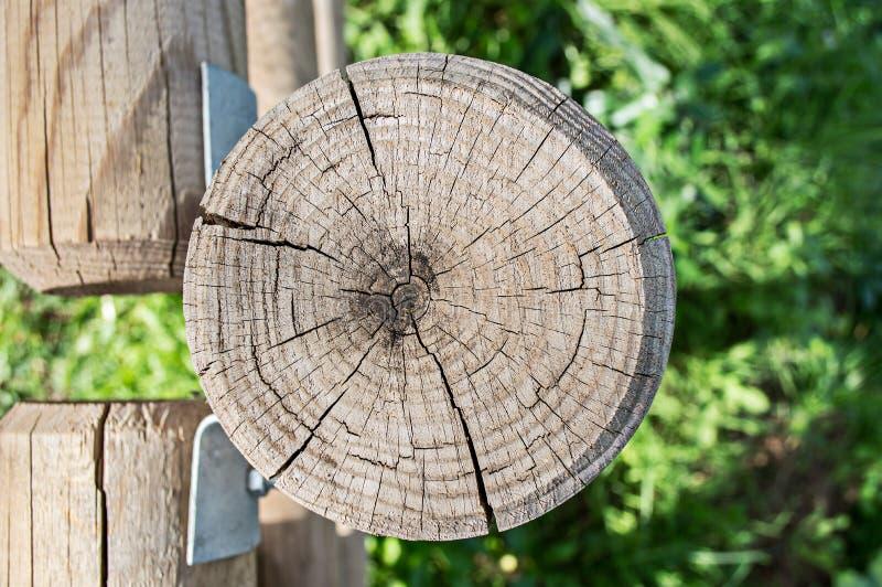 fäkta träängsommarsolrosor fotografering för bildbyråer
