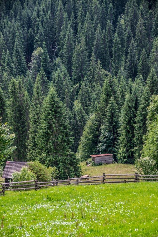 Fäktad lantgård bredvid skog arkivfoton