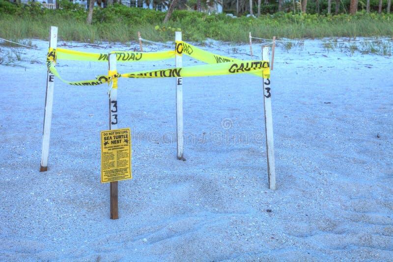 Fäktat av rede av mydas för en Chelonia för sköldpadda för grönt hav på Naples B royaltyfri bild