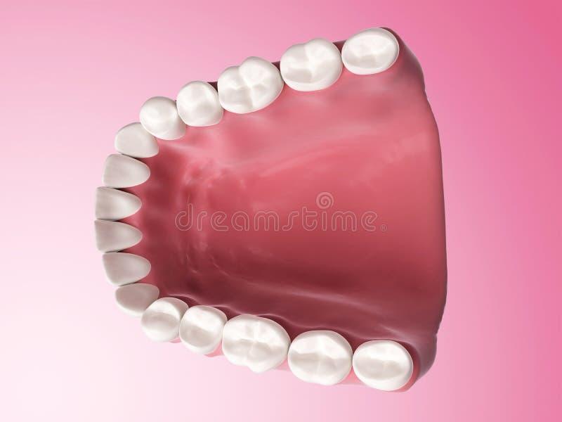 Fäll ned tänder stock illustrationer