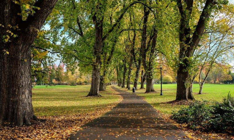 Fäll ned universitetsområdet i guld- höstljus, den Oregon delstatsuniversitetet, Co royaltyfria foton