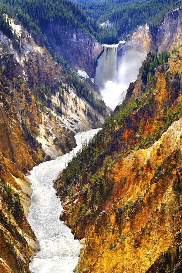 Fäll ned Yellowstone vattenfallnedgångar i kanjonnationalpark arkivbild