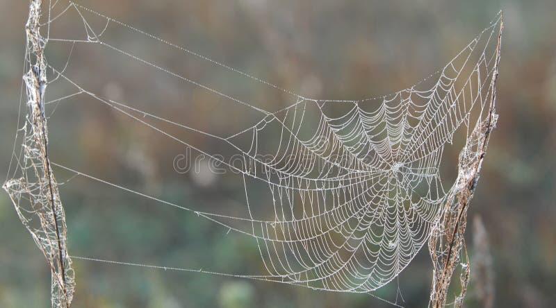 en krok upp spindel väv