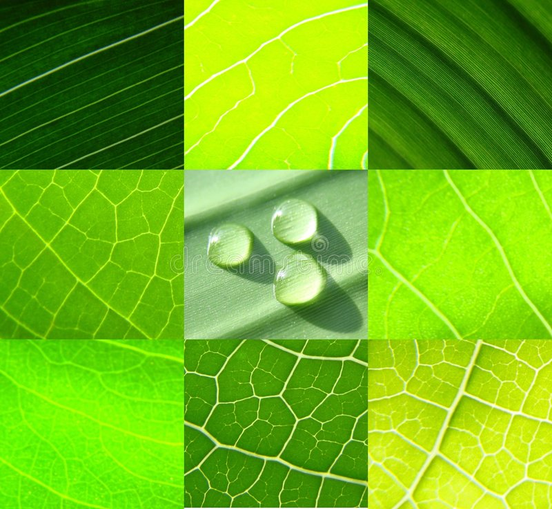Fällt grünes Blattwasser der Collage voll stockbilder