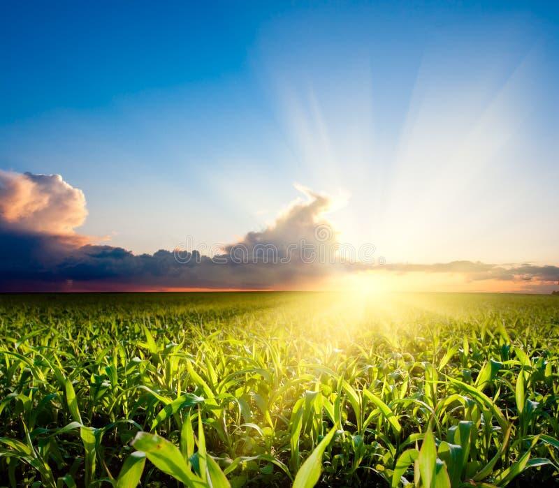 fält över solnedgång royaltyfri fotografi