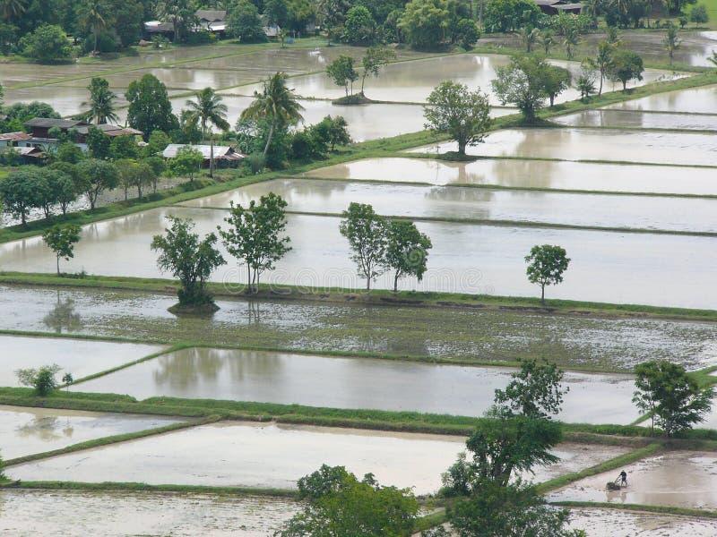 Download Fält översvämmade paddy arkivfoto. Bild av bevattning, land - 247902
