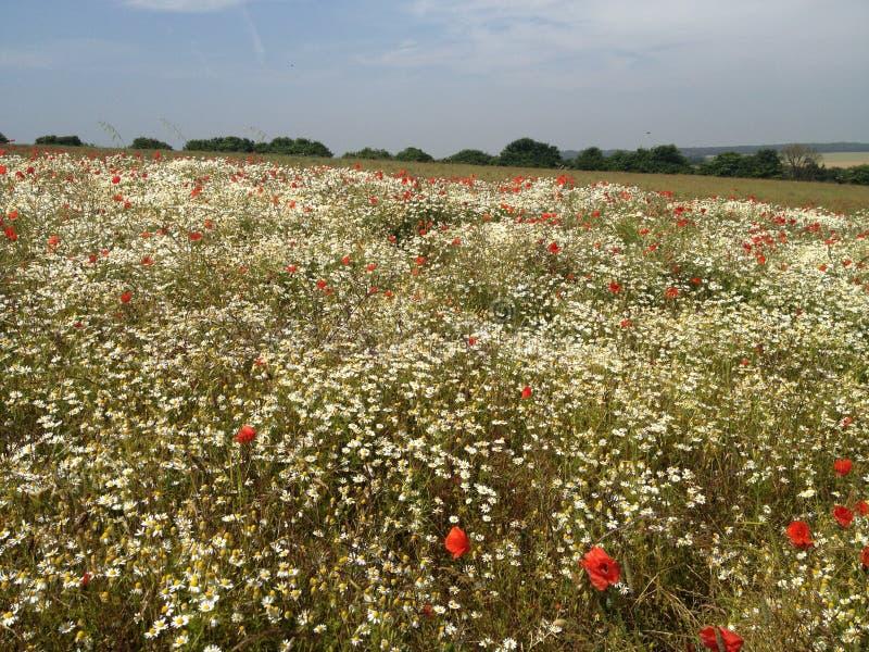 Fält av blommor arkivbild