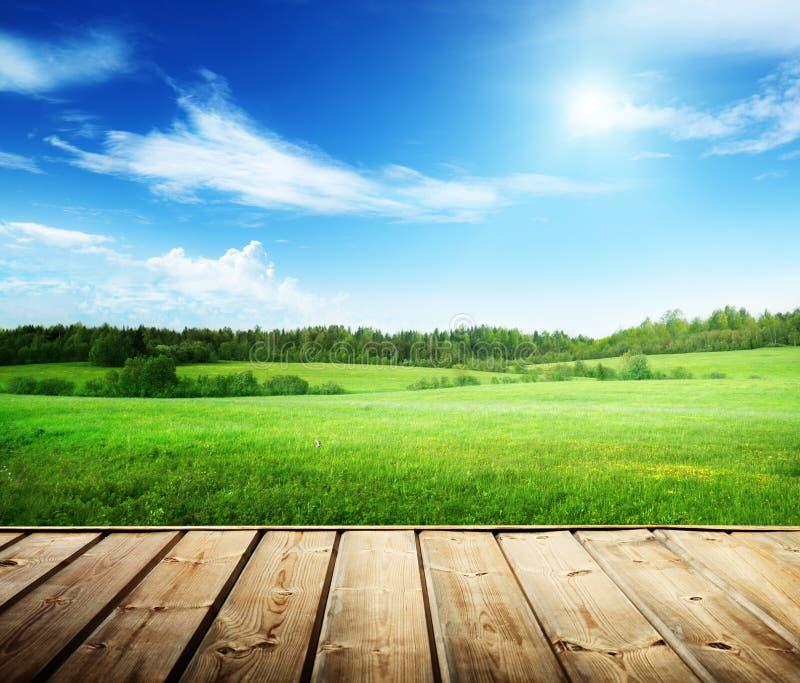 Fält av gräs arkivbild