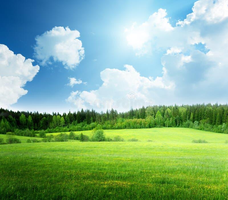 Fält av gräs och himmel royaltyfri bild
