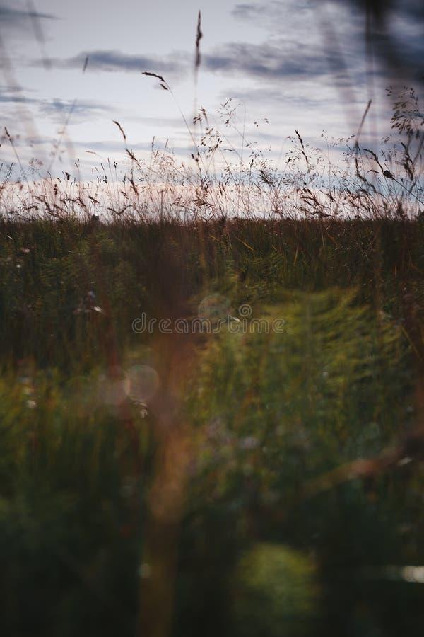 Fält av gräs under solnedgång arkivfoton