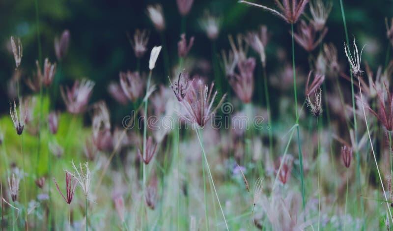 Fält av lilor arkivbilder