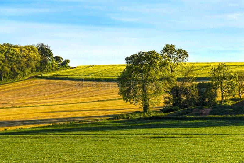 Fält av sått korn fotografering för bildbyråer