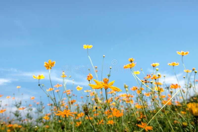 Fält av vårblommor arkivfoto