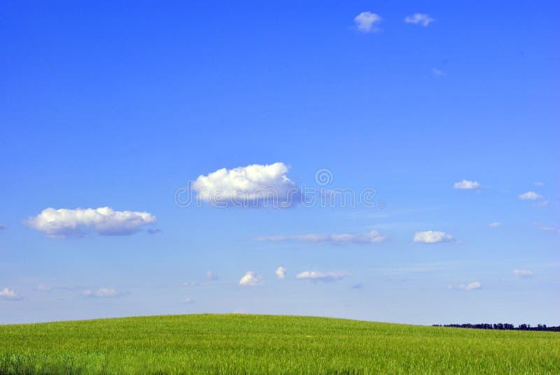 Fält av vintervete i vår längs träd, solig himmel och moln royaltyfria foton