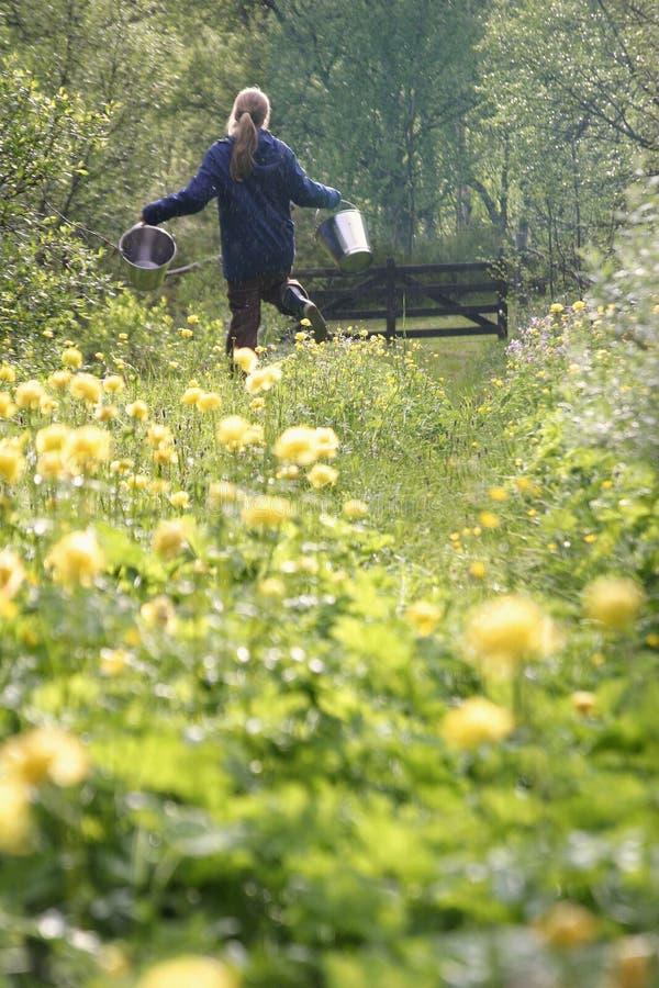 fält blommar lyckligt fotografering för bildbyråer