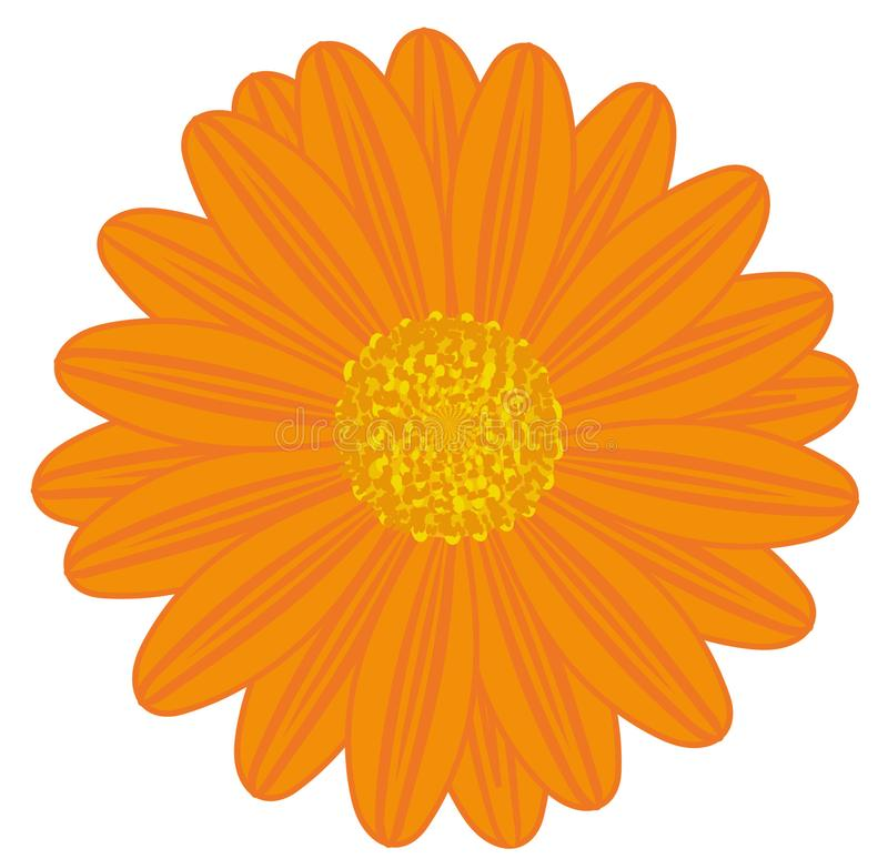 Fält Daisy Orange stock illustrationer