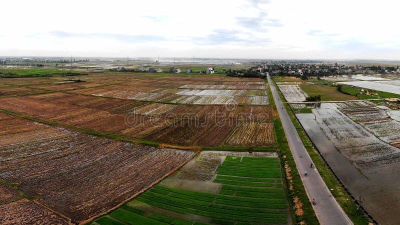 Fält efter risskördsäsong arkivfoto