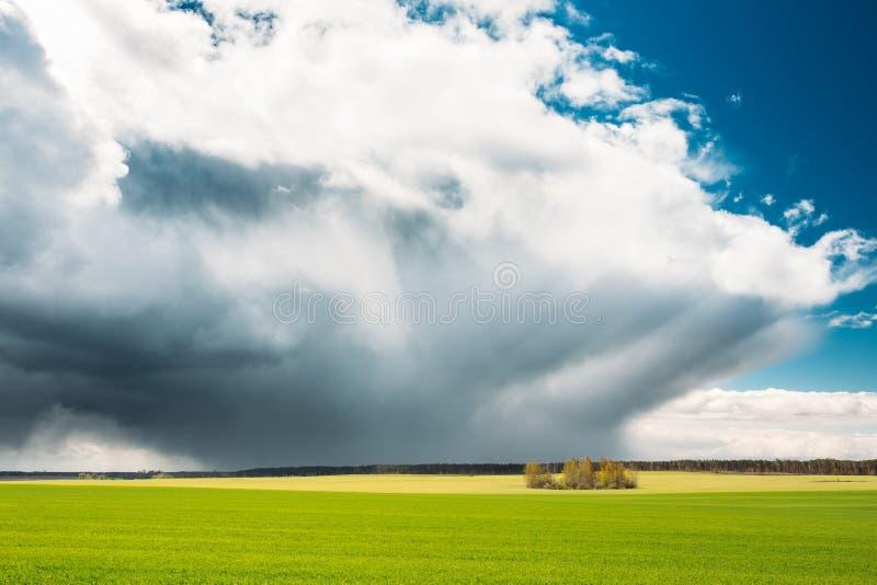 Fält- eller änglandskap med grönt gräs under dramatisk himmel för sceniska vårblått med vita fluffiga moln arkivbilder