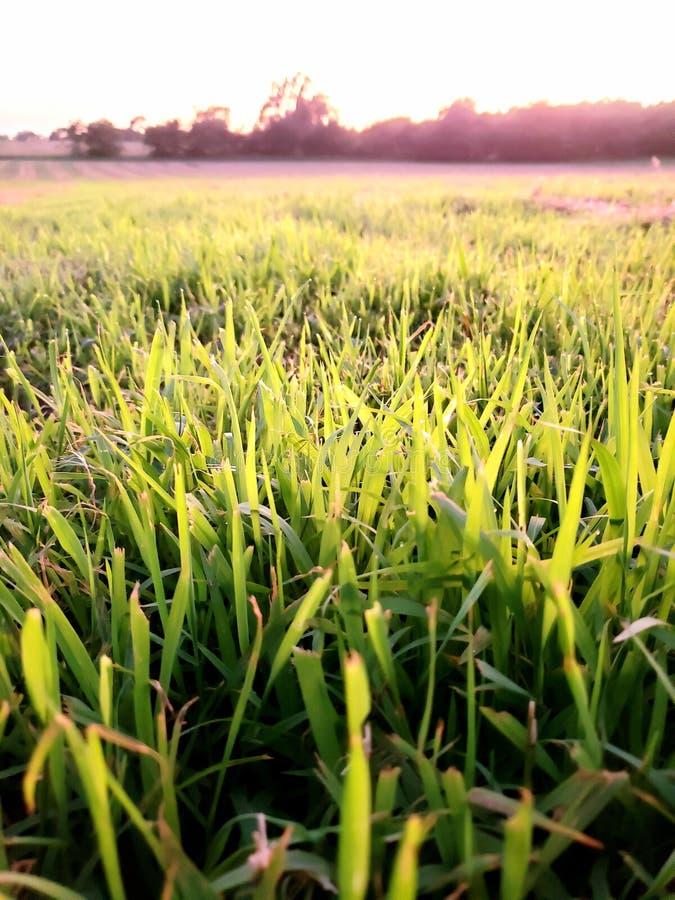Fält för öppet land av gräs arkivbilder