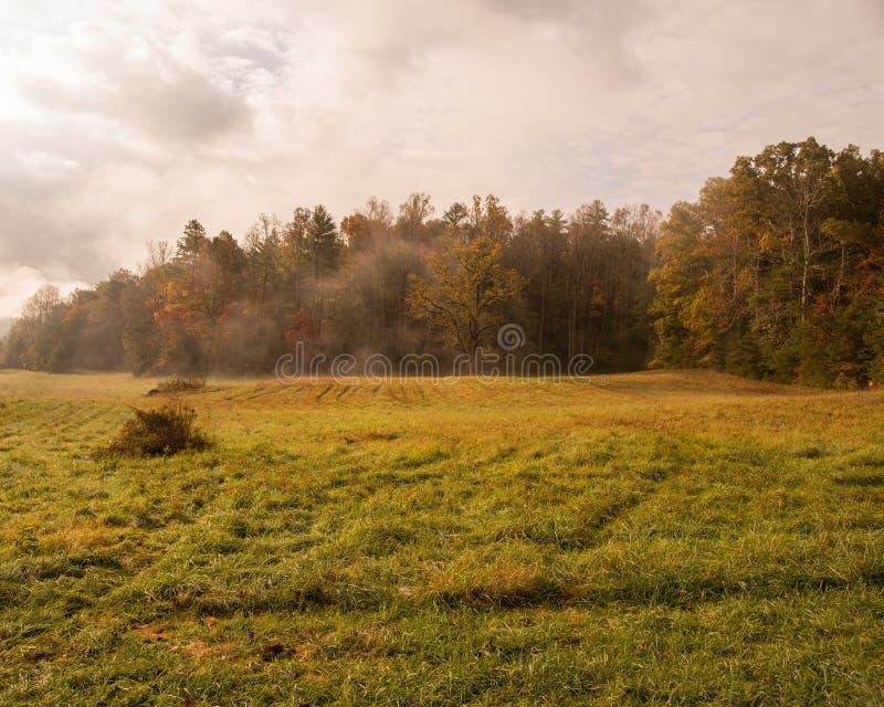 Fält för Cades liten vikhö royaltyfri fotografi