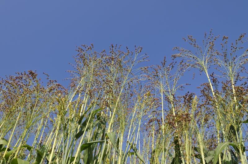 Fält för grön växt fotografering för bildbyråer