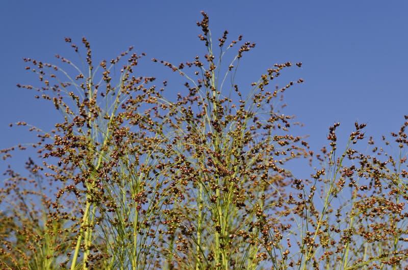 Fält för grön växt arkivbilder