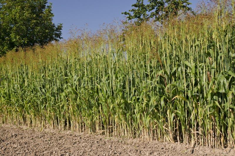 Fält för grön växt royaltyfri fotografi