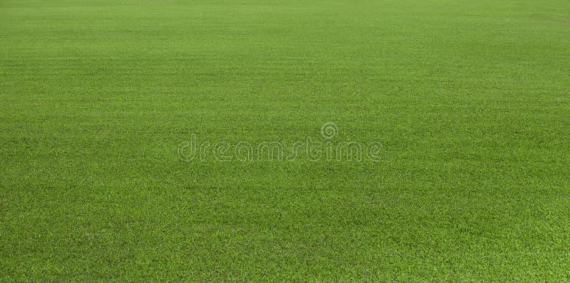Fält för grönt gräs, grön gräsmatta Grönt gräs för golfbanan, fotboll, fotboll, sport Grön torvagrästextur och bakgrund för D fotografering för bildbyråer