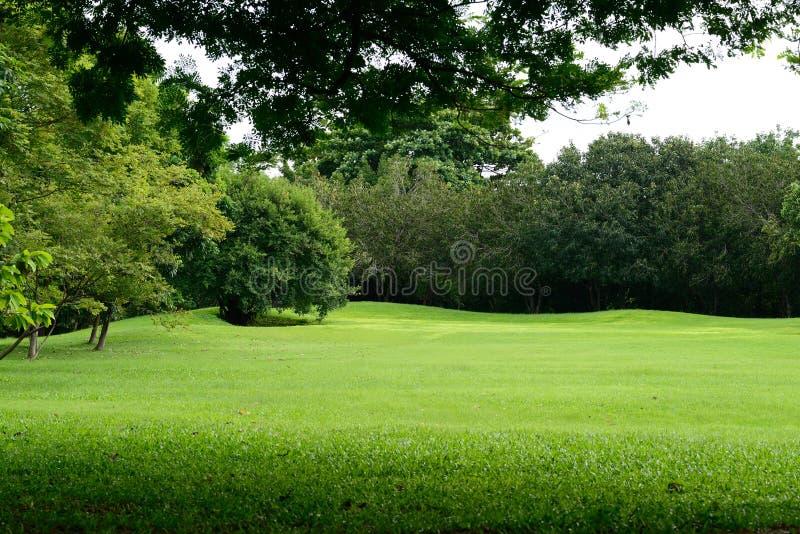 Fält för grönt gräs i parkera royaltyfri foto
