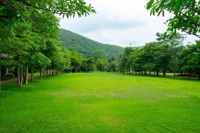 Fält för grönt gräs för vår i parkera med berglandskapBac royaltyfri fotografi