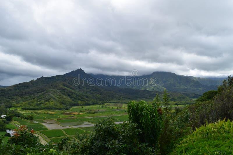 Fält för Hanalei dalTaro i Kauai Hawaii royaltyfria bilder