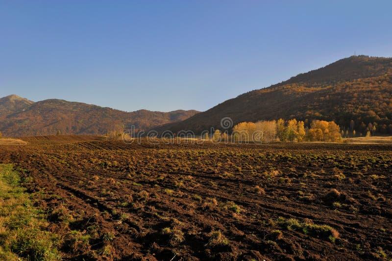 Fält för kultiverad organisk mat arkivbild
