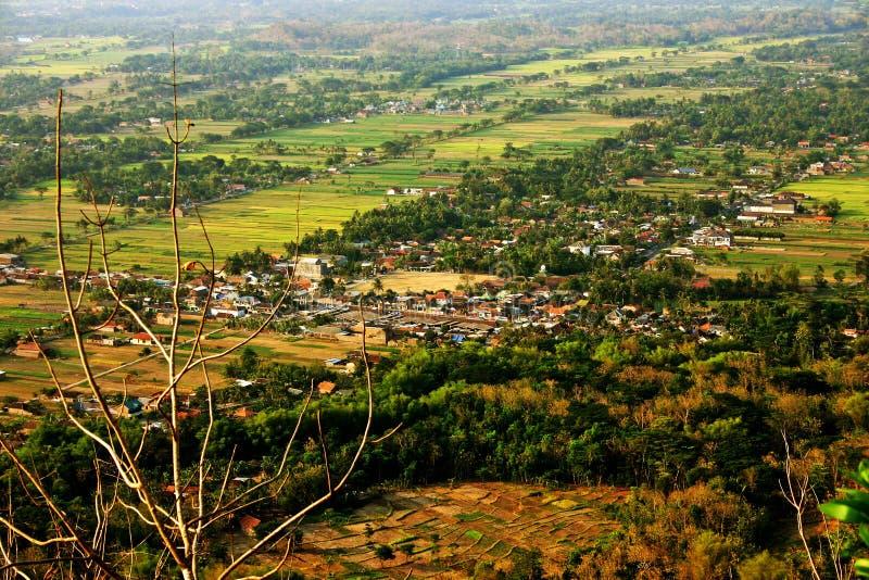 Fält för landaf-risfält royaltyfri foto