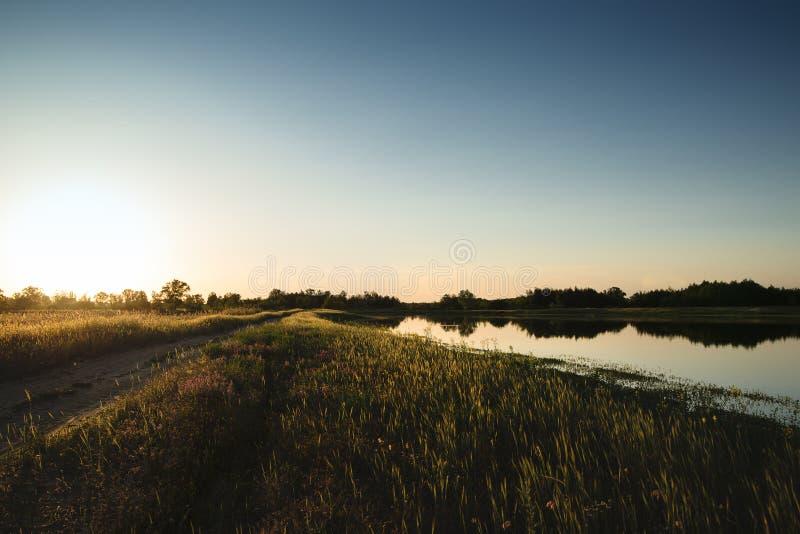 Fält för landskapnatursommar av blommor på solnedgången arkivbild