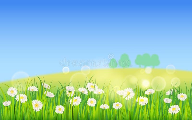 Fält för mallbakgrundsvår av blommor av tusenskönor och grönt saftigt gräs, äng, blå himmel, vita moln vektor vektor illustrationer