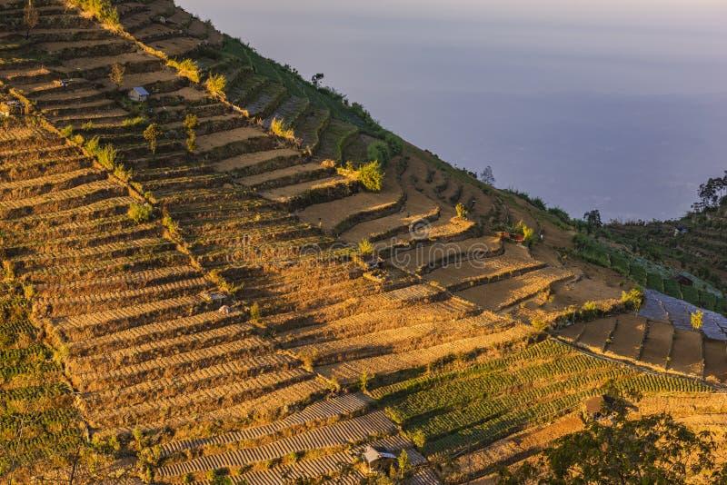 Fält för potatis- och grönsaklantgårdbunt i den Dieng platån arkivfoton