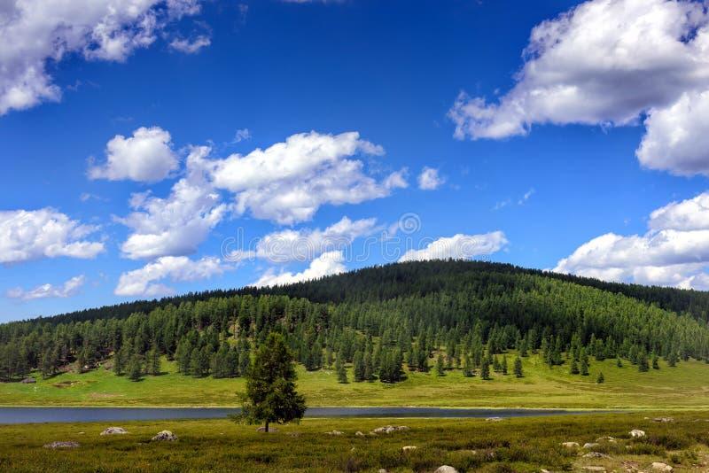 Fält flod, träd på kullar mot blå himmel med vita moln F?lt f?r sommarpanormamaflod mot en bl? himmel arkivbild