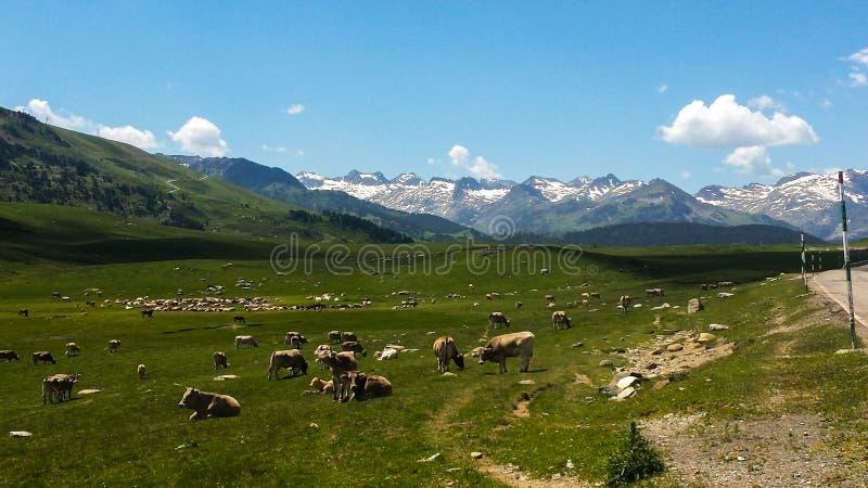 Fält från Catalonian Pyrenees royaltyfri bild