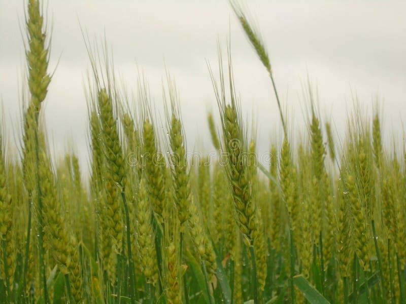 Fält i den regniga dagen av vår royaltyfri bild
