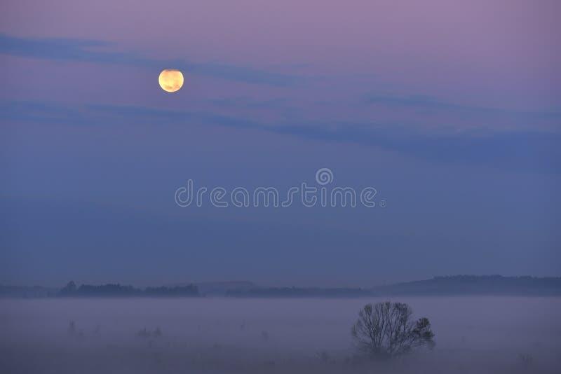 Fält i dimma i ottan och den fulla stora månen royaltyfri foto
