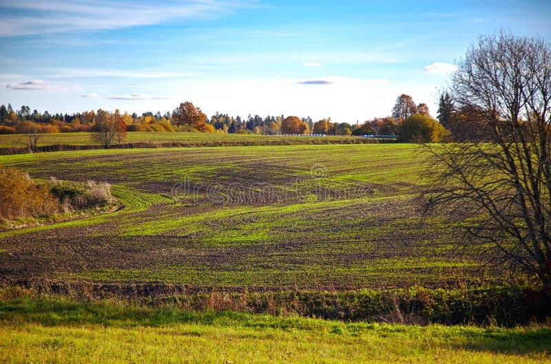 Fält i höst fotografering för bildbyråer