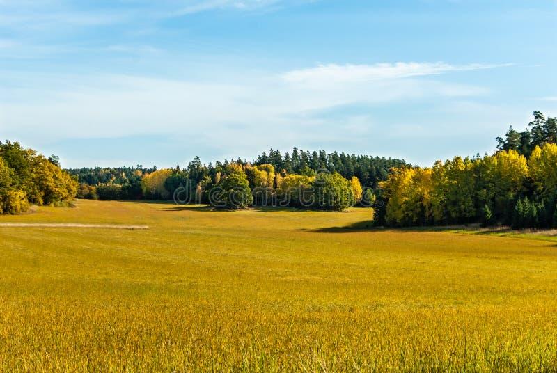 Fält i nedgång arkivbild