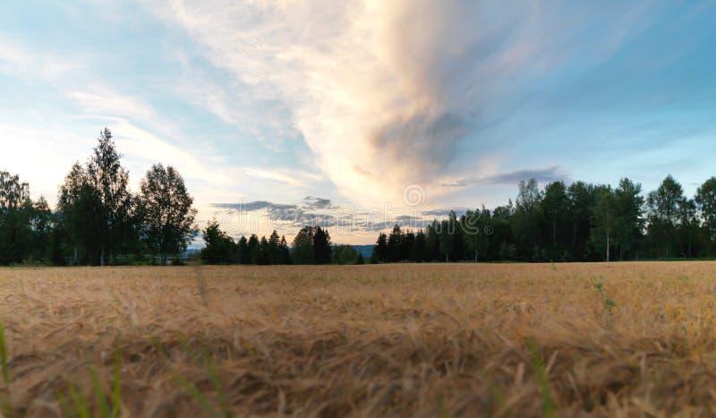 Fält i Norge fotografering för bildbyråer