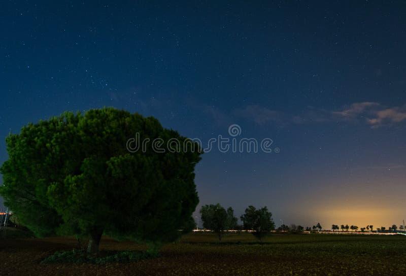 Fält i Spanien Jerez de la Frontera royaltyfri fotografi