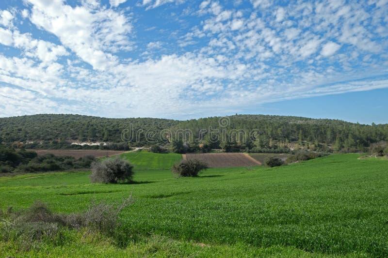 Fält, kullar och härlig himmel i Judea, Israel fotografering för bildbyråer