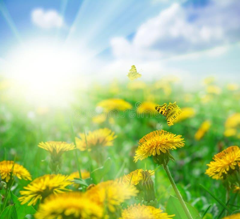 Fält med den maskrosblommor, fjärilar och solen i landskap för blå himmel för eps-mapp för 8 kort greeting bland annat mall Grunt arkivbilder