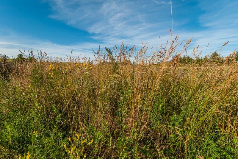 fält med ett högt torrt gräs i förgrunden under en blå himmel arkivfoton